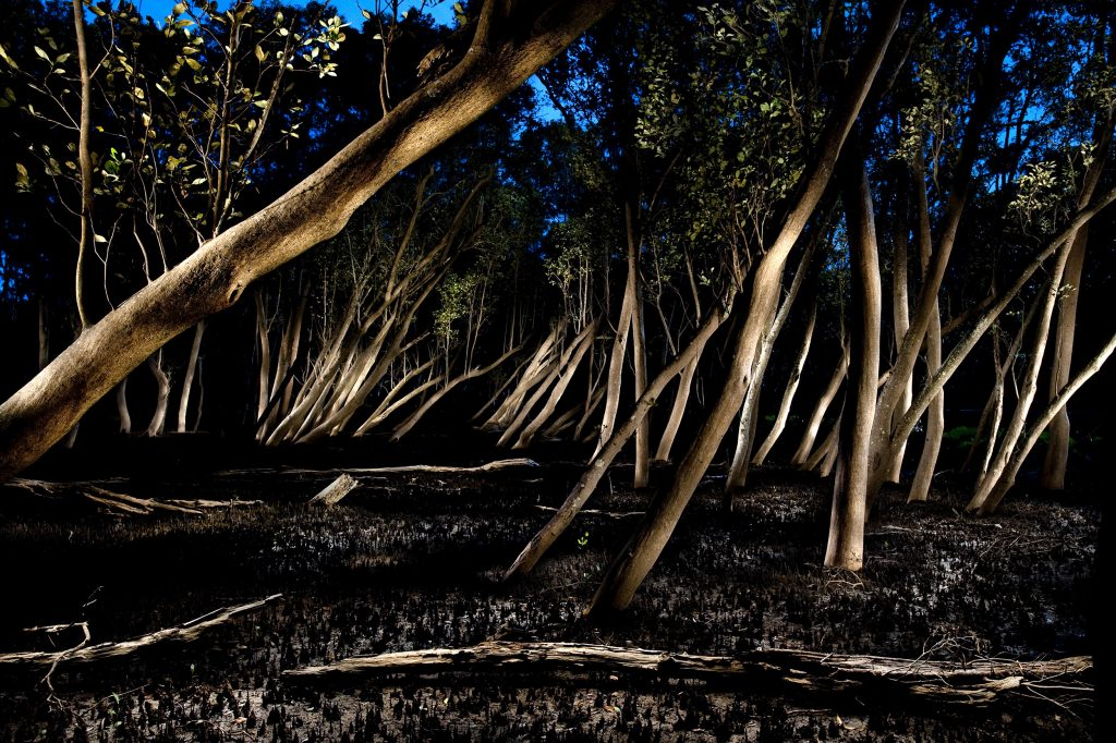 Mangrove Forest #1, Hawkesbury River 2010